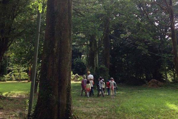 野外活動:夏の合宿